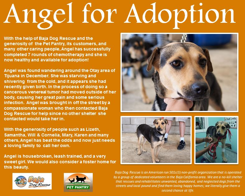 Angel for Adoption