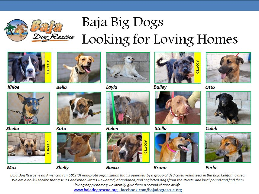 Baja Big Dog updated 6-1-13