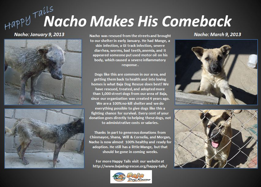 Nacho - Happy Tails
