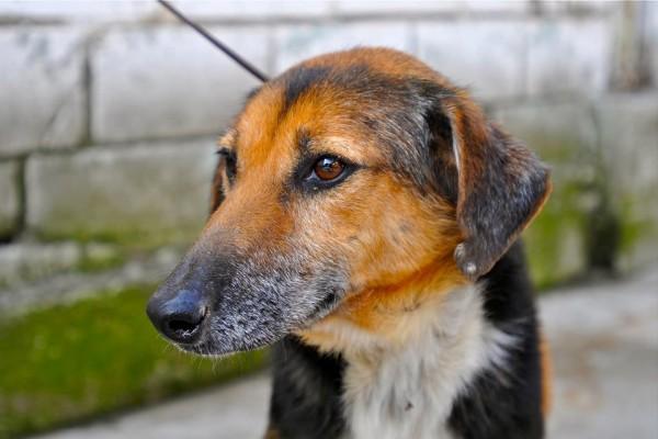 San Diego No Kill Dog Rescue