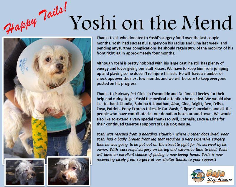 Yoshi Post